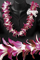 Speedishuttle hawaii meet and greet transportation standard lei 2750 including tax gate greet is limited to hnl ogg m4hsunfo